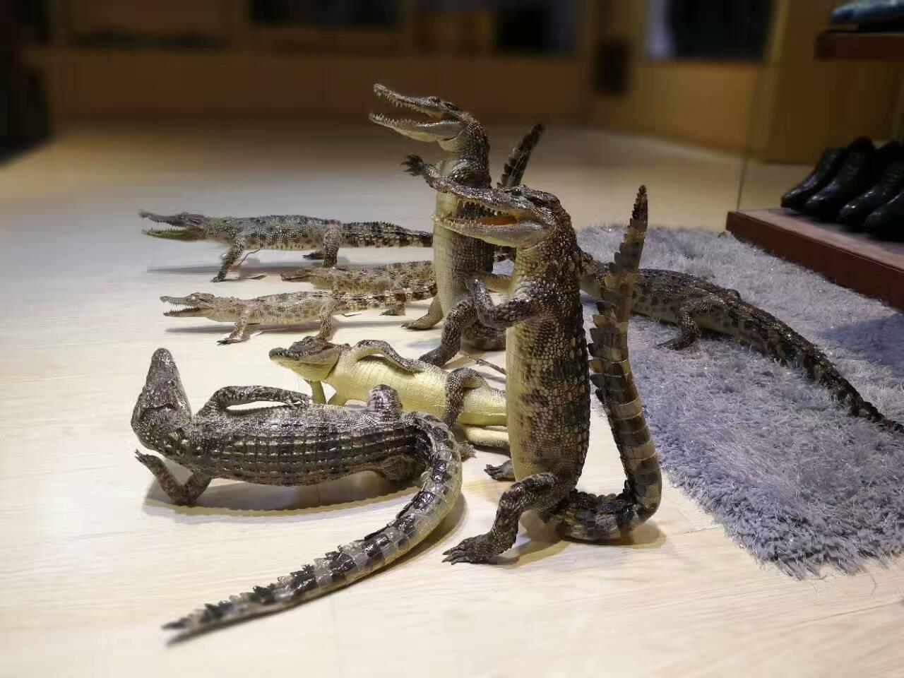 文昌市鳄鱼皮钱包公司