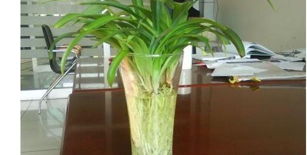 办公室养花.jpg