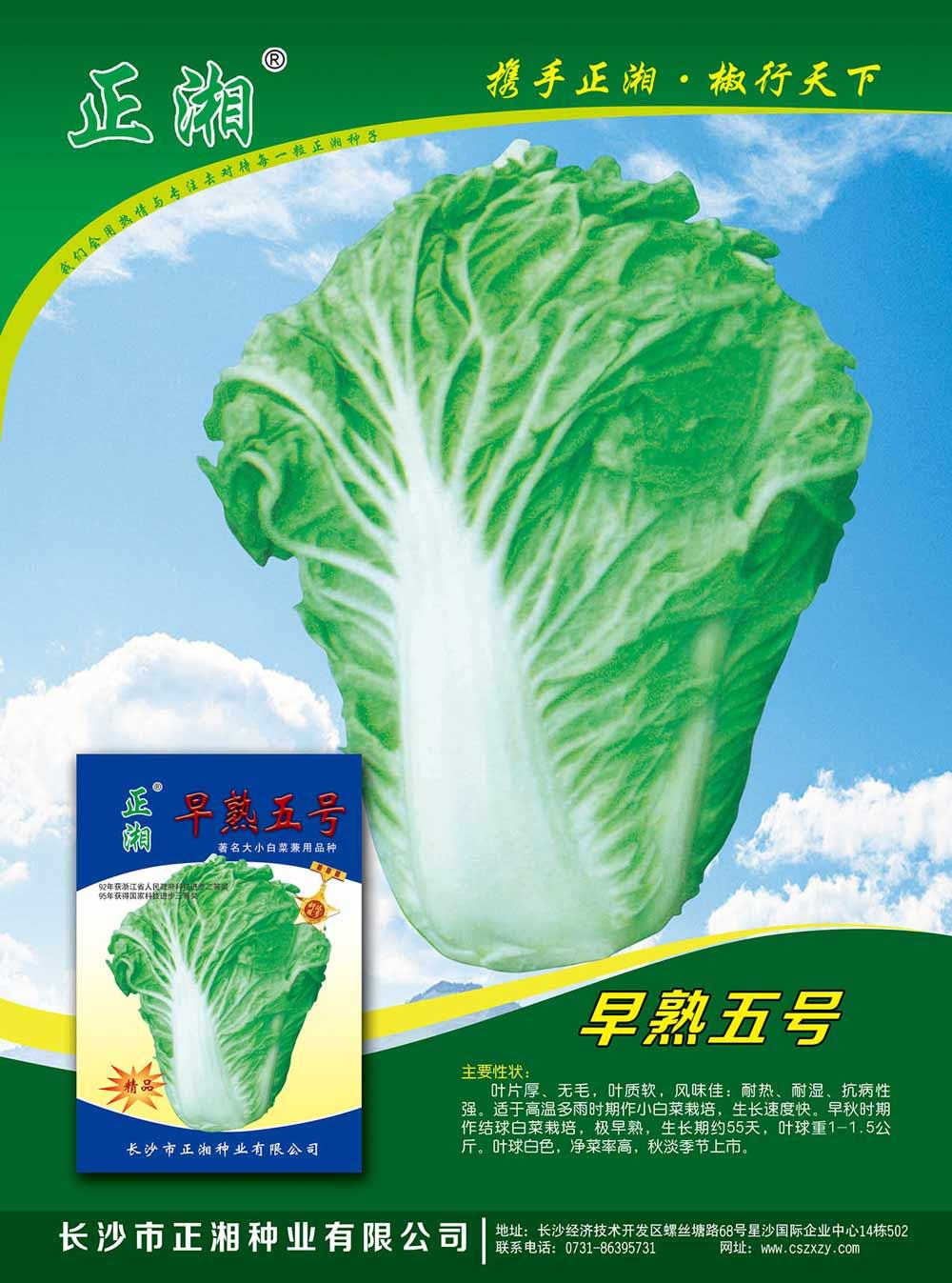 亚虎app网页版早熟5号白菜亚虎国际 唯一 官网