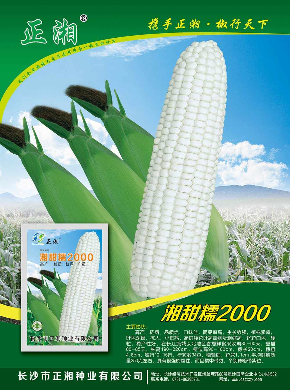 湘甜糯2000玉米亚虎国际 唯一 官网