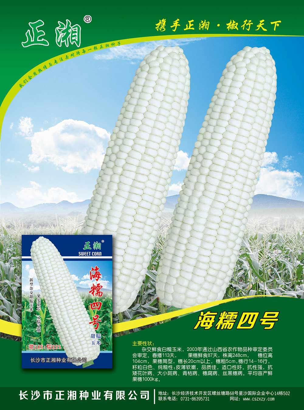 亚虎app网页版海糯4号玉米亚虎国际 唯一 官网