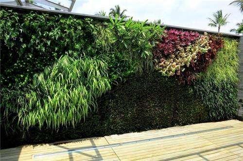 海口万绿园室外植物墙,垂直绿化